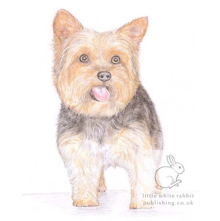 Yorkshire Terrier Card Gift