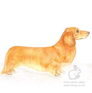Long-haired Dachshund Card Gift